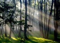 Spiritualiate taoista – De ce un copac nu este un copac